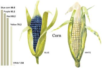 Corn Nutrient Comparison