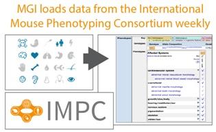 Mouse             Genome Informatics Platform