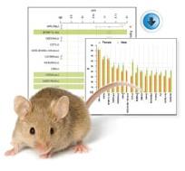 Mouse             Phenome Database