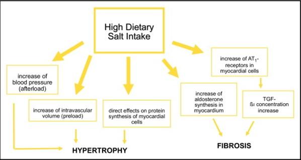 High Dietary             salt intake