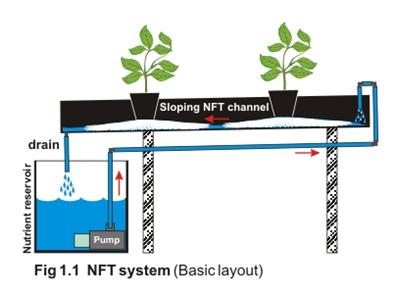 NFT System (Basic Layout)